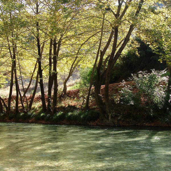 Plane trees at the banks of Acheron river in Parga, where Adams Hotel is located.